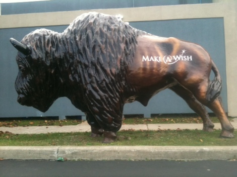 Make a Wish Bison