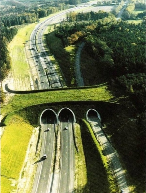 Highway_A50_Netherlands_Bridge